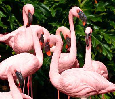 Pretty pink flamingos