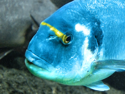 A colorful fish in an aquarium