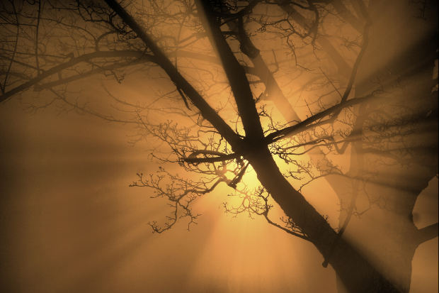 tree-with-gold-rays